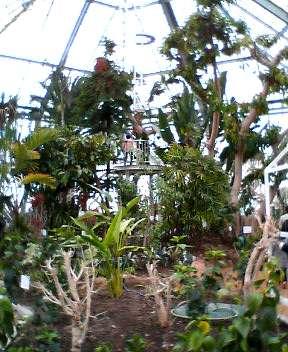 函館市熱帯植物園がリニューアルオープン!_b0106766_15261061.jpg
