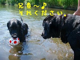 川遊び~♪_b0003270_2142213.jpg