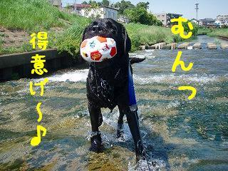 川遊び~♪_b0003270_2147578.jpg