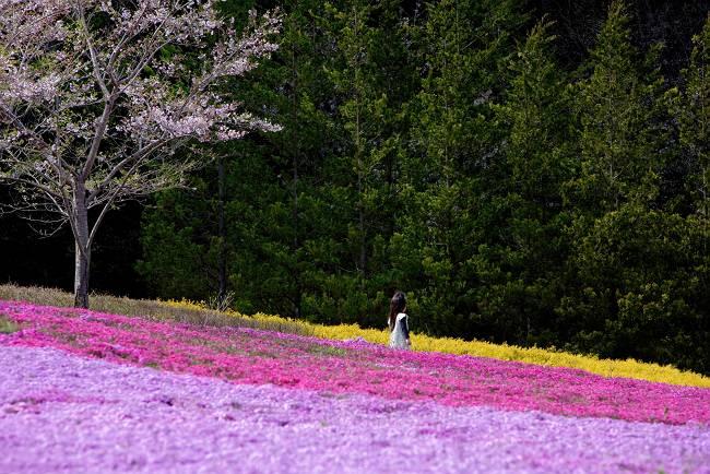 芝桜の公園_b0074098_7265495.jpg