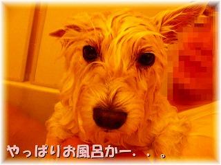 f0039907_071363.jpg