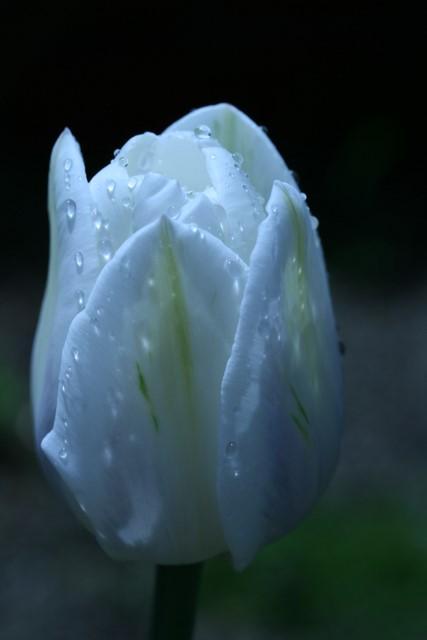 雨上がりの庭にて_d0114414_11171339.jpg