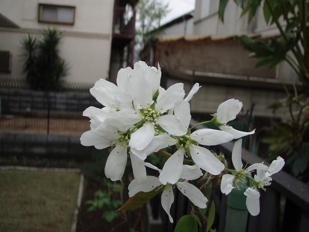 f0085291_20115235.jpg