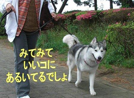 f0112407_1556576.jpg