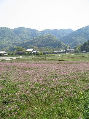 豊後歳時記・・・れんげ畑_c0001578_1673547.jpg