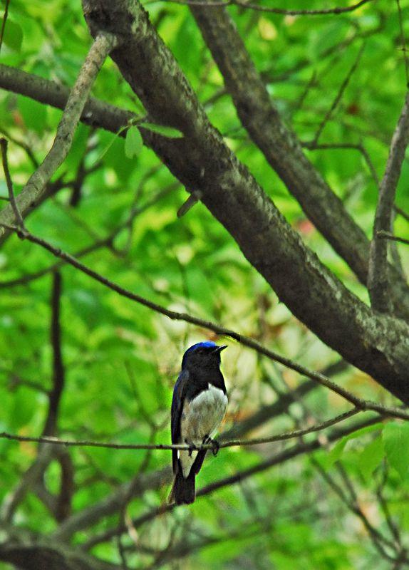 夏の青い鳥_b0021897_23311188.jpg