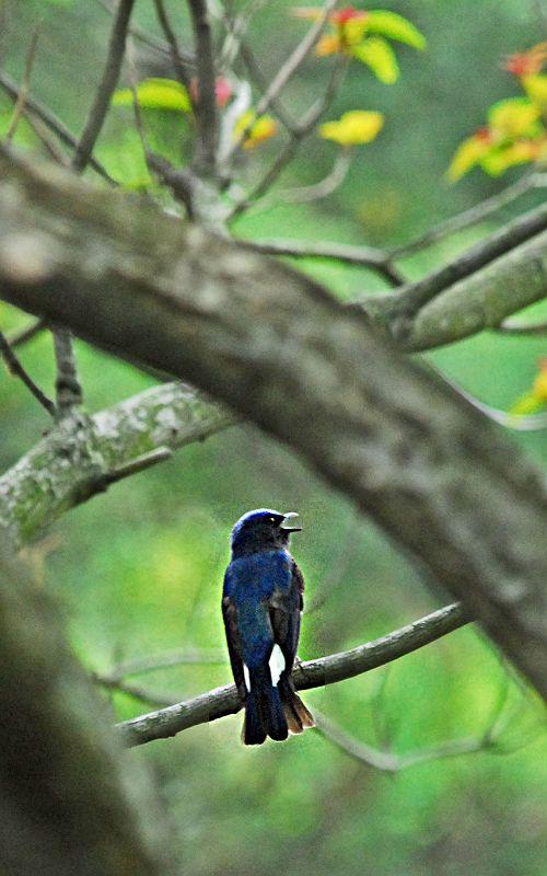 夏の青い鳥_b0021897_23311915.jpg