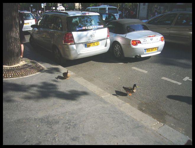 ■散歩を楽しむ鳥たち(パリ)_a0008105_18341560.jpg
