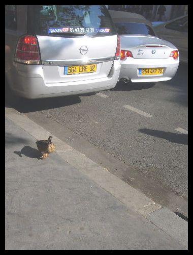 ■散歩を楽しむ鳥たち(パリ)_a0008105_18344355.jpg