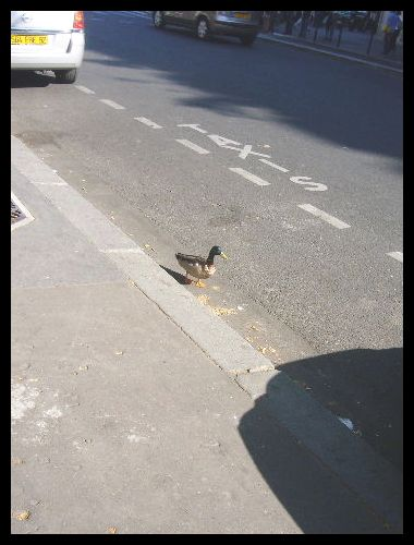 ■散歩を楽しむ鳥たち(パリ)_a0008105_18345619.jpg