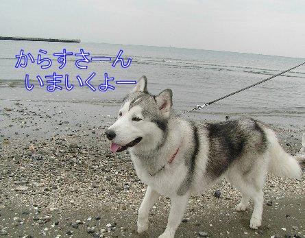 f0112407_11502894.jpg