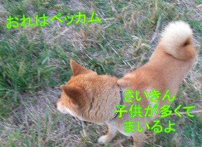 f0112407_9515369.jpg