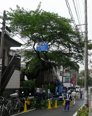 保護樹木の伐採_d0004728_8181549.jpg