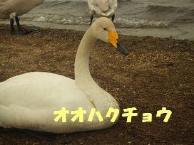 b0082757_2365281.jpg