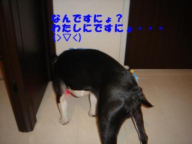 f0110199_2219142.jpg