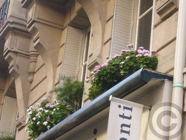 ■窓(パリ)_a0008105_201343.jpg