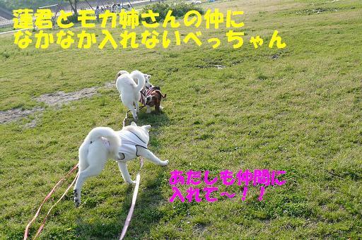 f0121712_2258465.jpg
