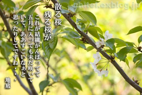 f0085214_1265739.jpg