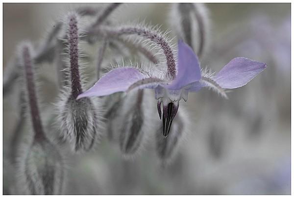 春は花盛り_c0042324_21573039.jpg