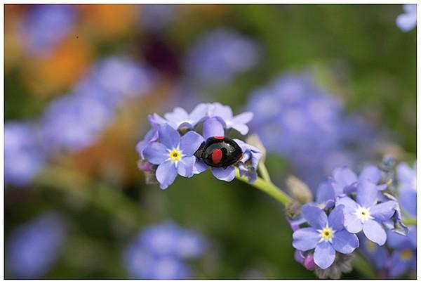 春は花盛り_c0042324_21585822.jpg