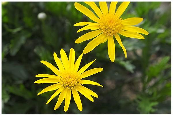 春は花盛り_c0042324_21592066.jpg