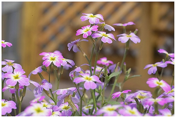 春は花盛り_c0042324_21594594.jpg