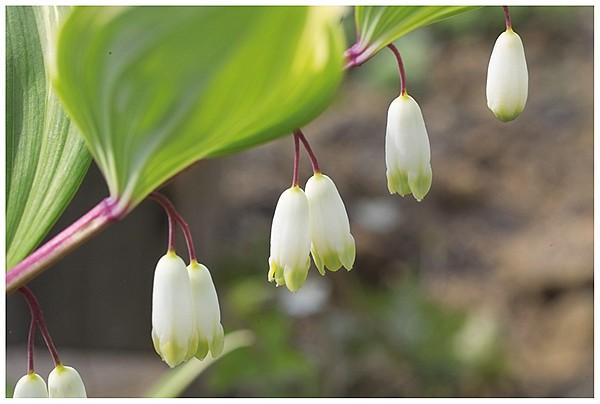 春は花盛り_c0042324_2159752.jpg