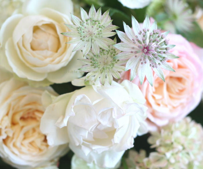 シェ松尾天王洲倶楽部さま 最新のバラたち_a0042928_23391985.jpg