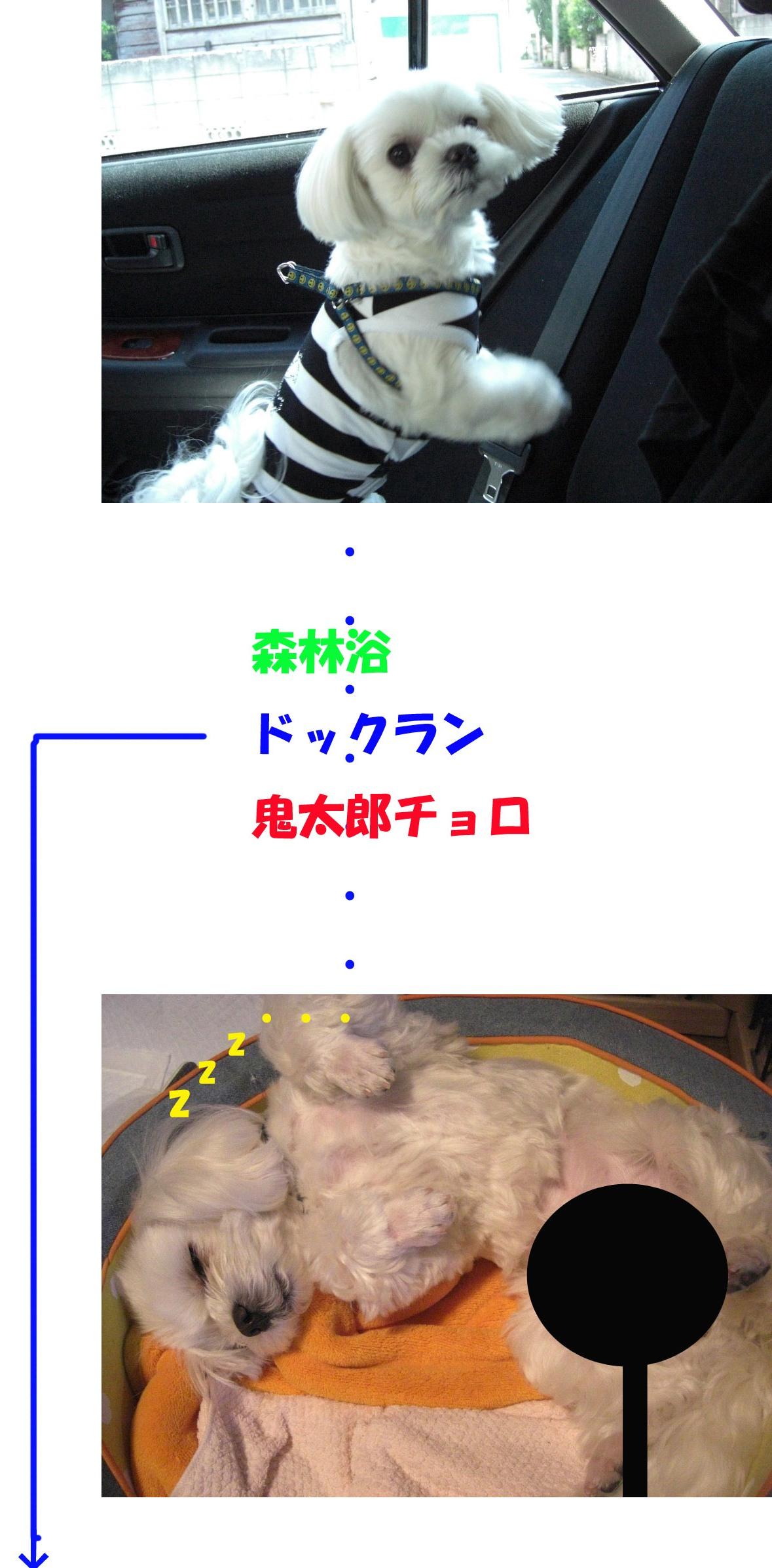 b0060071_4425948.jpg