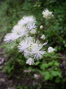 森で一番優雅な花_f0106597_025927.jpg