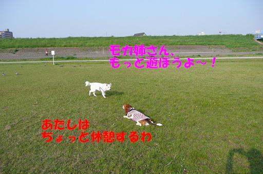 f0121712_10142311.jpg