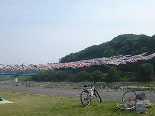 第20回泳げ鯉のぼり相模川_c0025217_134756.jpg