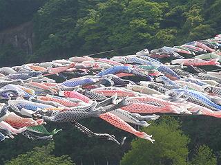 第20回泳げ鯉のぼり相模川_c0025217_1365261.jpg