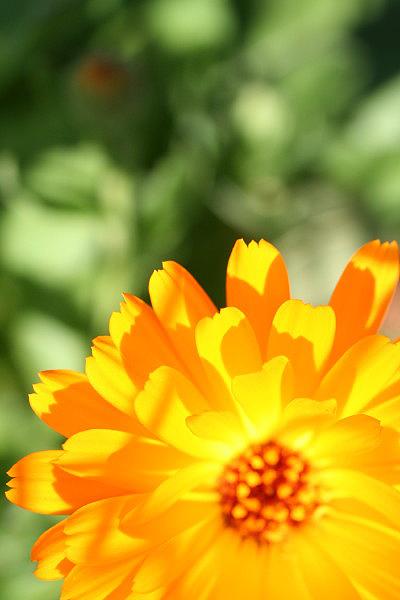 太陽色_d0081851_16562153.jpg