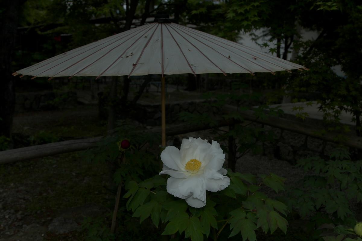京都 乙訓寺 <牡丹>  1_f0021869_17383485.jpg
