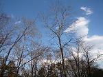 ♪ 清里の森で・・♪_f0026093_23582091.jpg