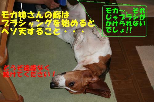 f0121712_1051714.jpg