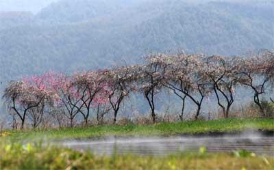 春爛漫_d0102327_20512992.jpg