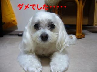 f0005727_1614591.jpg
