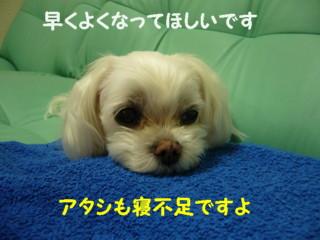 f0005727_16171271.jpg