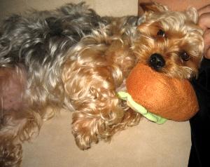 今度はごろんと横になって、お腹を出し、すりすりとにじり寄って甘えている状態。それでもホットドッグは咥えたままです。