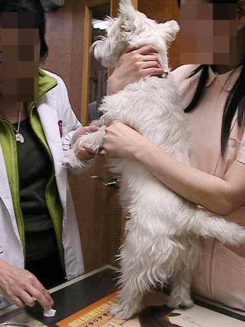 フィラリア&狂犬病注射_f0034444_13593847.jpg