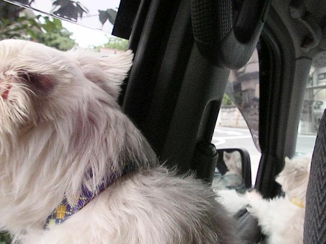 フィラリア&狂犬病注射_f0034444_14204997.jpg