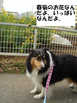 f0046854_201559.jpg