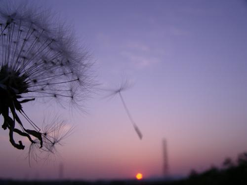 a0013879_2011196.jpg