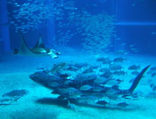 大阪の海遊館に行ってきました~_b0083389_17415293.jpg