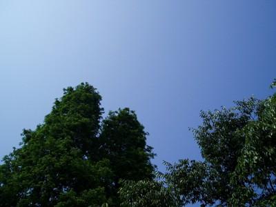 五月晴れ_d0104091_1832960.jpg