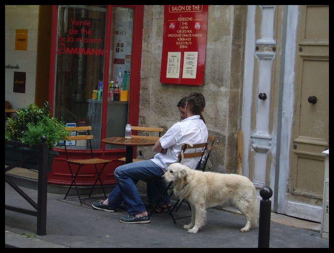 ■街角のワンコ(パリ)_a0008105_2205157.jpg