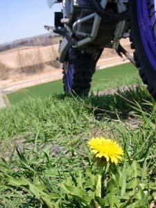 お花の季節到来!_f0096216_18334118.jpg