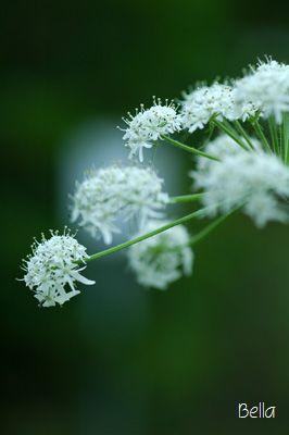 小石川植物園・5月の花_f0012718_22351681.jpg
